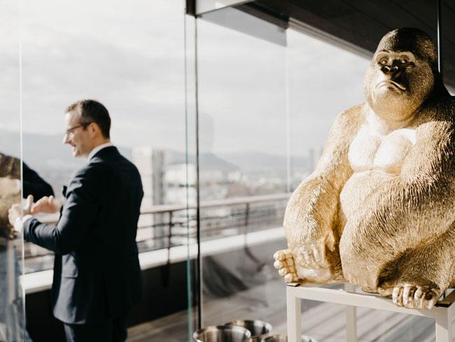 swisspartners-diversity_gorilla_teaser